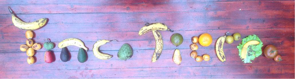 Früchte der Finca Tierra 2018